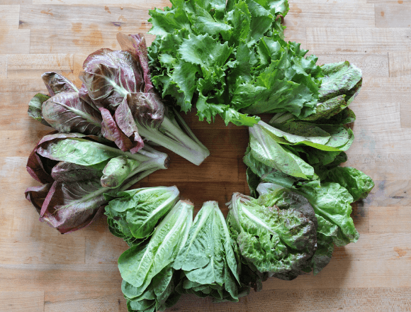 the lettuces