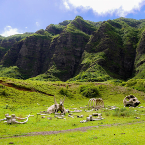 Movie set in Hawaii amongst the lush green canyons
